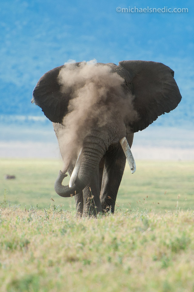 African Elephant in Cloud of Dust
