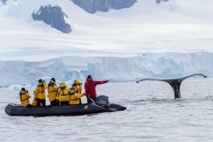 Amazing whale encounter in Antarctica