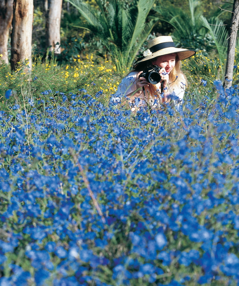 Blue Lechenaultia credit Tourism Western Australia