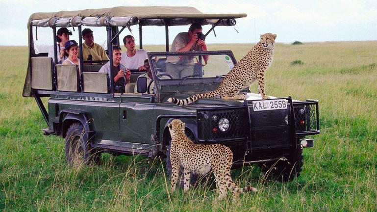Cheetah encounter - Kenya, Africa