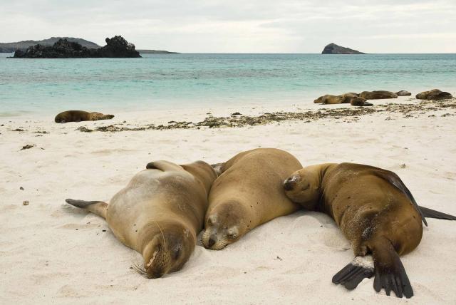 Galapagos sea-lion beach