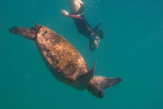 Galapagos people swimming
