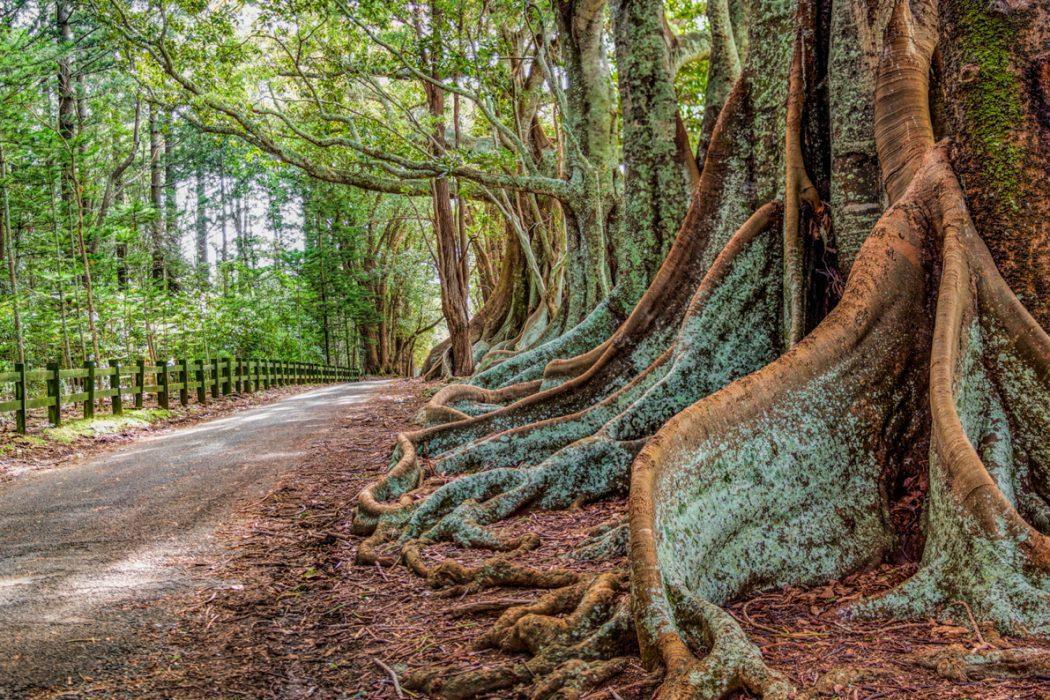 Norfolk Island Photo Workshop_2