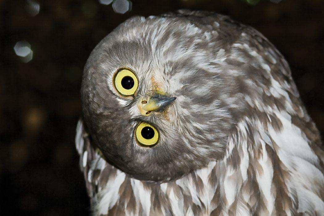 Northern Territory bird photography workshop_2