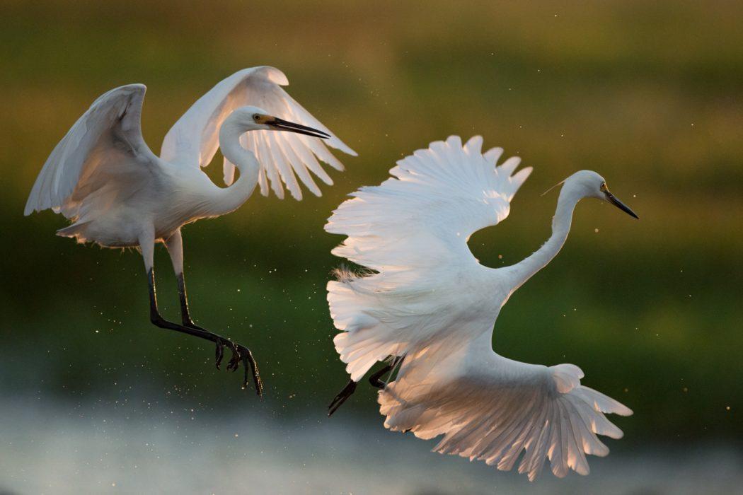 Northern Territory bird photography workshop_4