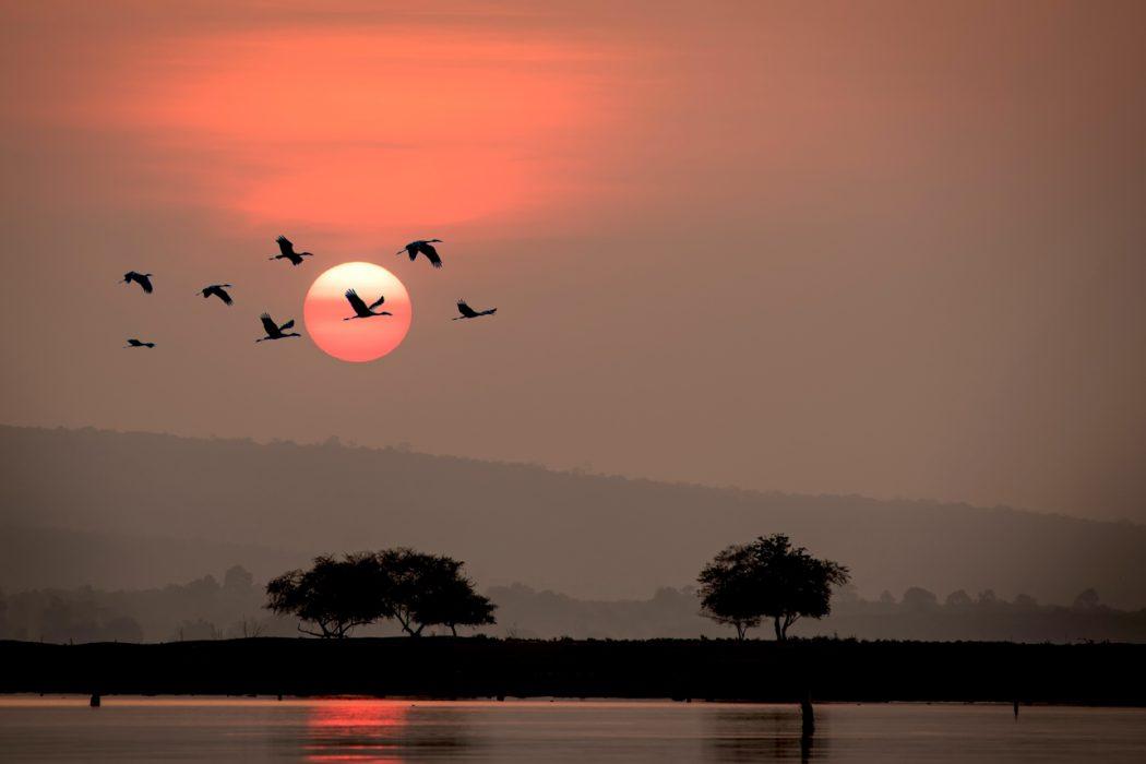 Northern Territory bird photography workshop_5
