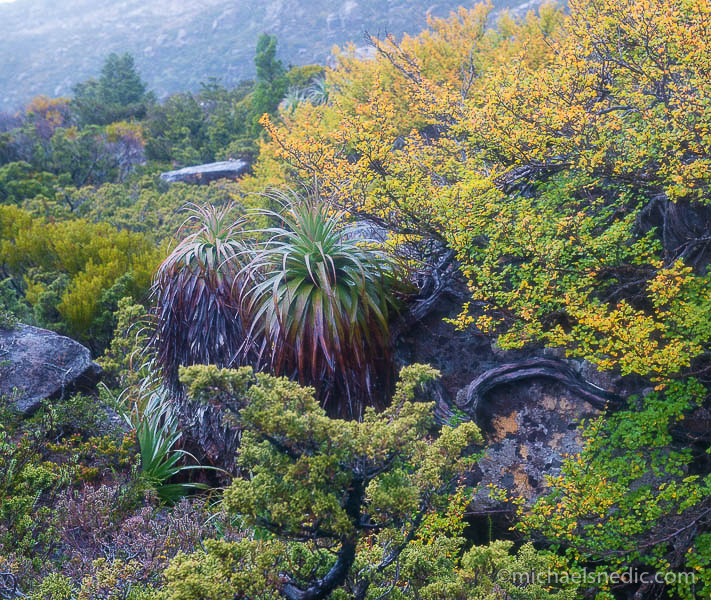 Recommended Photographic Destination – Cradle Mountain, Tasmania – Autumn Fagus Colour Changes