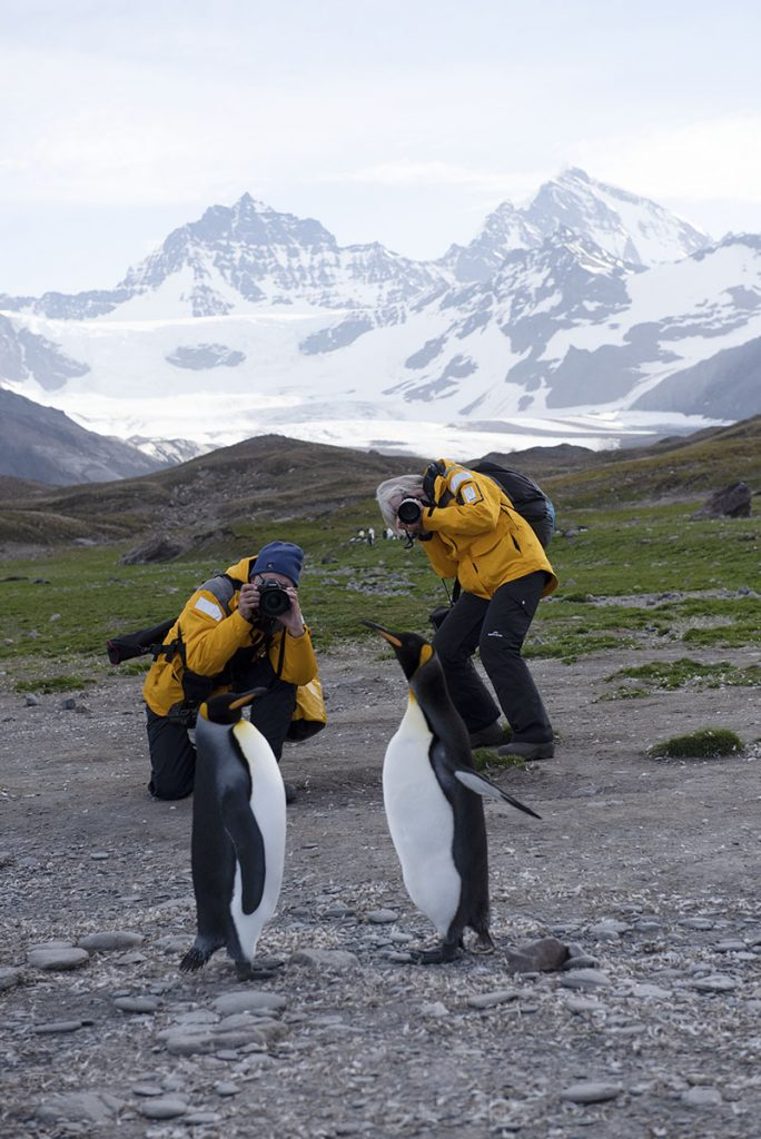 Participants photographing penguin in South Georgia