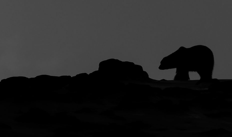 Polar Bear silhouette