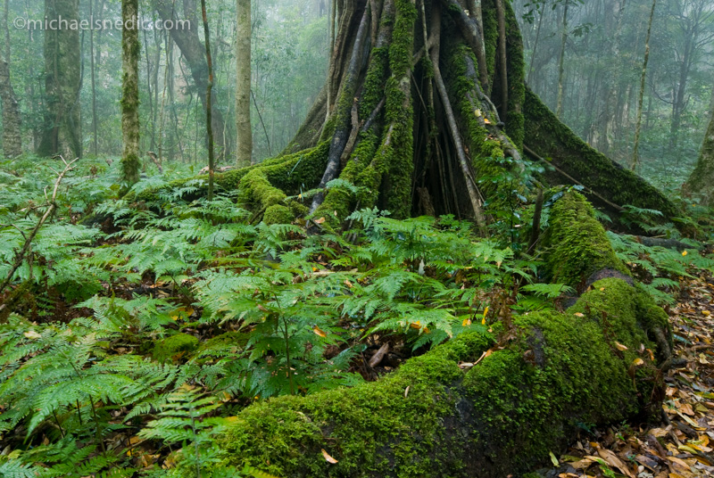 How To Best Photograph Rainforest Scenes, Including Waterfalls