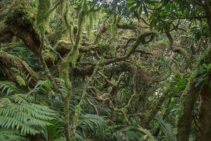 Rainforest Lord Howe Island