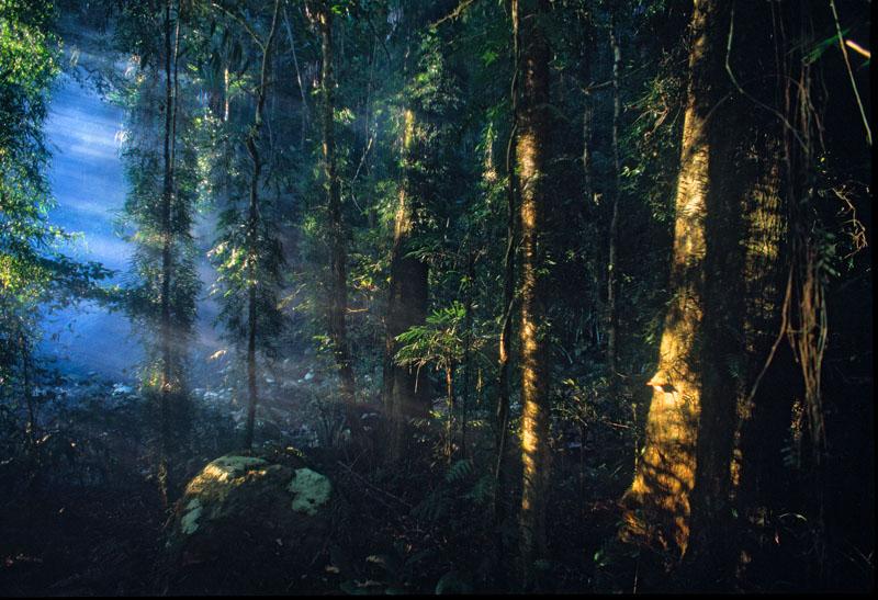 Rays of light in rainforest