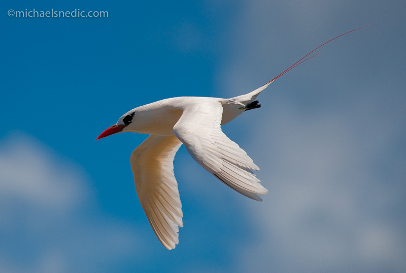 Photography Tips – How To Capture Birds In Flight