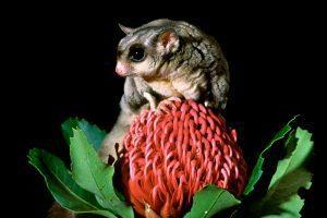 Wildlife Photo Course – Brisbane