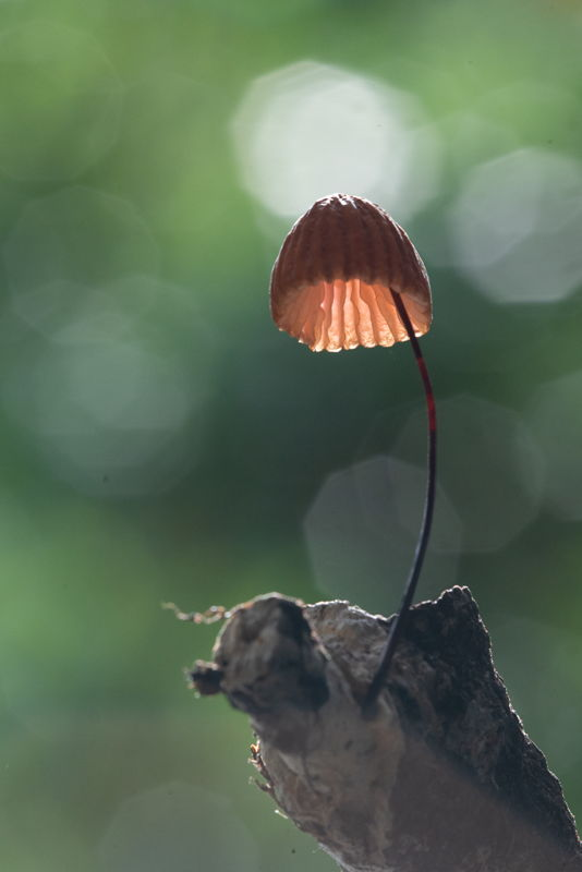 Sunrise fungi