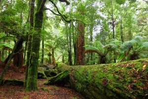 Tarkine Photography Tour