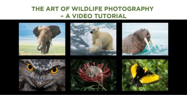 The Art of Wildlife Photography video tutorial