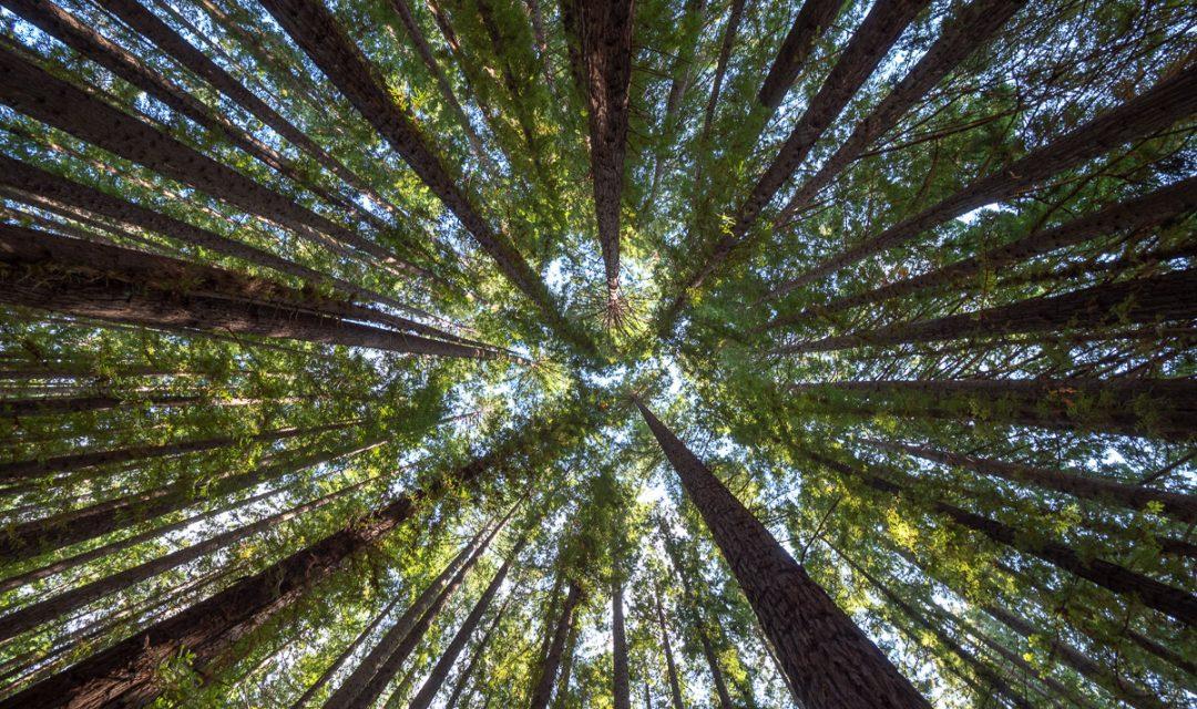 Warburton-Redwood-Forest