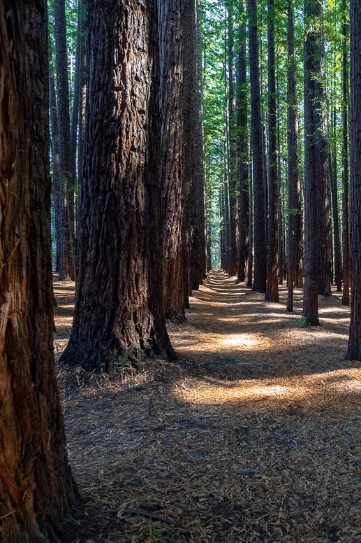 Warburton Redwood Forest