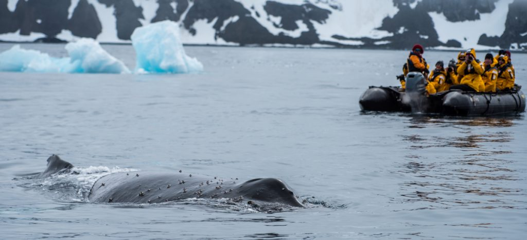Antartic Whale encounter