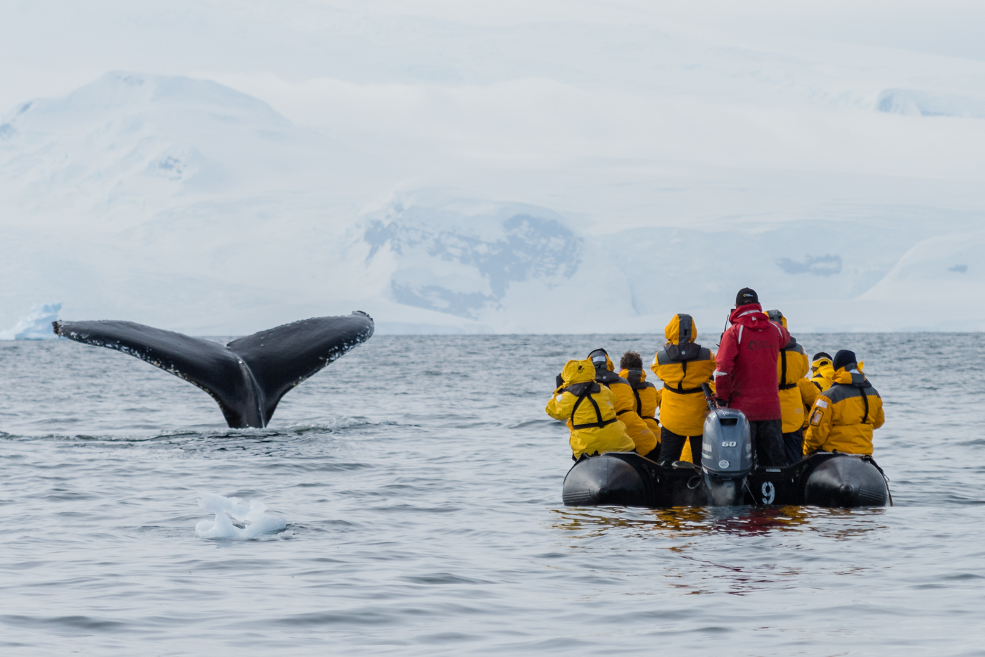 Whale encounter - Antarctica