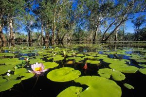 8 Day Kakadu and Top End Photography Adventure