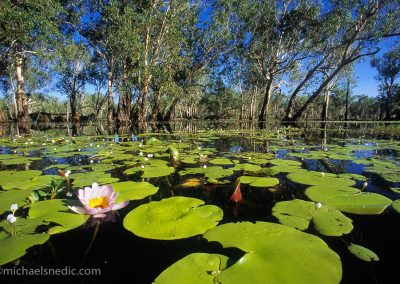 Yellow Waters Kakadu NP – NT