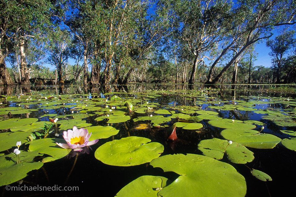 Yellow Waters Kakadu NP – NT