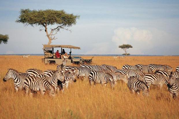 Zebra experience - Kenya, Africa