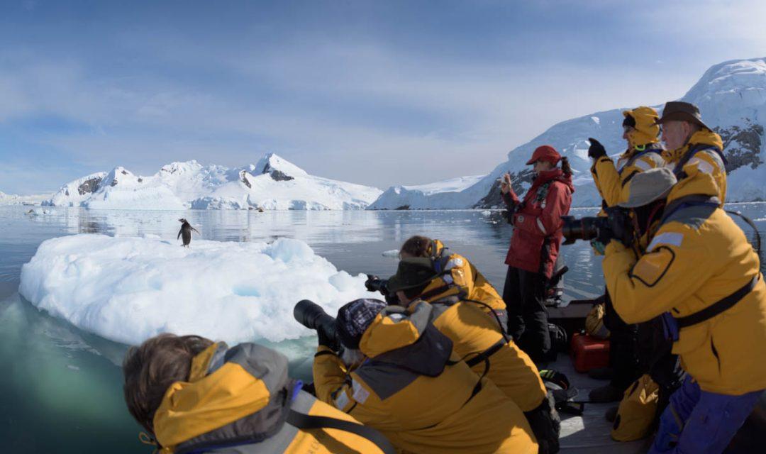 Close Penguin Encounter - Antarctica