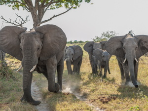 11 Day African Wildlife Photo Safari – Okavanga Delta, Botswana