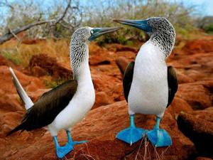Galapagos Islands Wildlife Photography Expedition