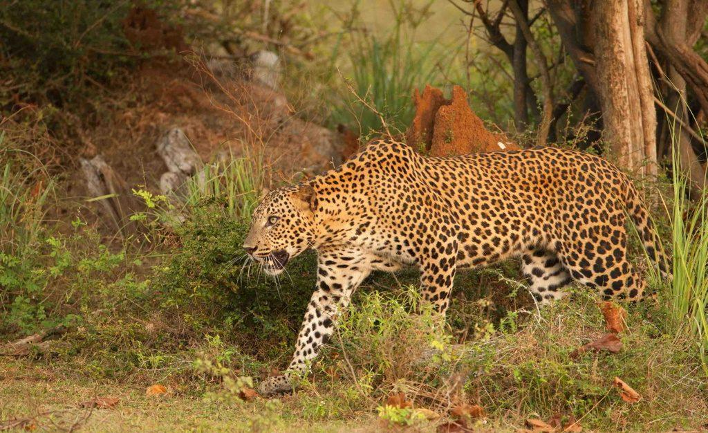 11 Day 'Wild Sri Lanka Photo Safari'