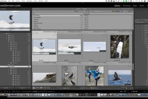 Weekend Brisbane Lightroom Workshop – Brisbane
