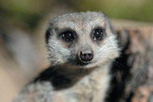 Full Day Wildlife Photography Workshop – Australia Zoo