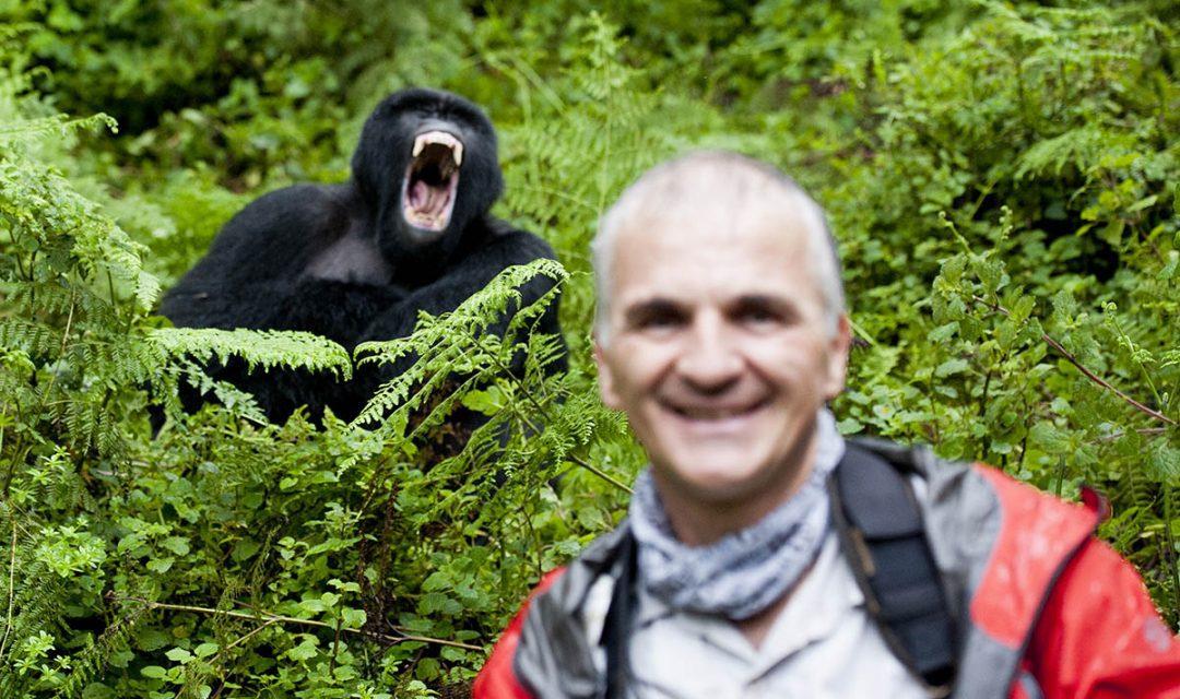 Mountain Gorilla Photobomb